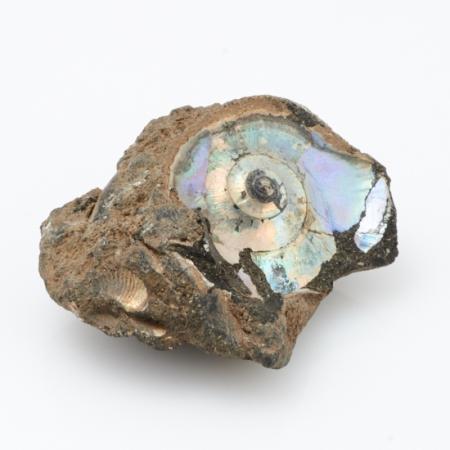 Окаменелость аммонит, фосфоритовый песчаник  XS