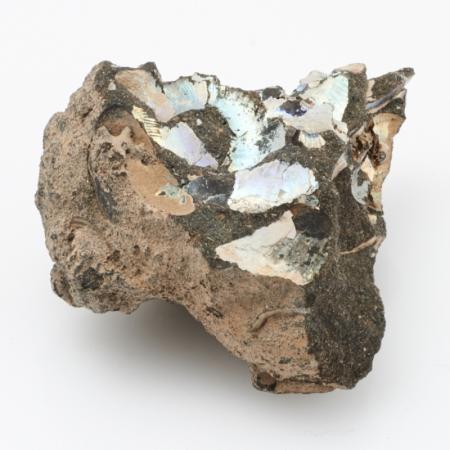 Окаменелость аммонит, фосфоритовый песчаник  S