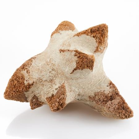 Друза глендонит (беломорская рогулька)  S